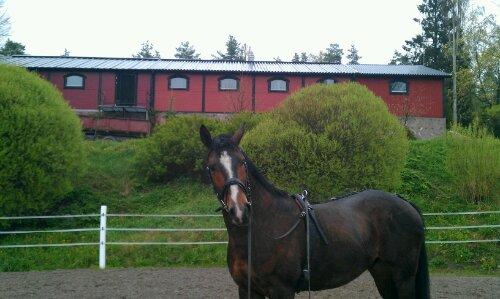 Mitä tehdä jos sisäänasettaessa hevonen alkaakin pienentää ympyrää, eikä halua asettua?