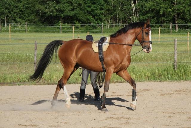 Muistoja kesältä ja miten jokaiselta hevoselta oppii