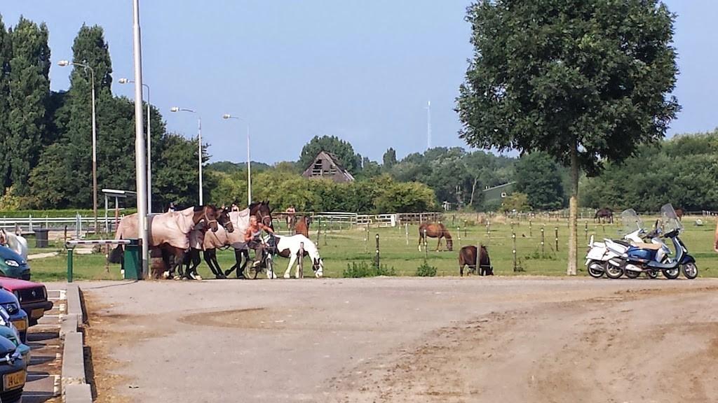 hevosten taluttamista pyörällä