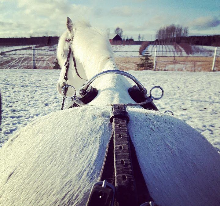 Katsomossa taas: Horse in Motion